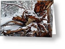 San Jacinto Fallen Tree Greeting Card