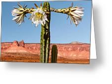San Pedro Cactus Greeting Card by Nancy Strahinic