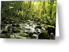 Sanctuary Stream Photograph By Belinda Greb