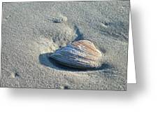 Sand And Seashell Greeting Card