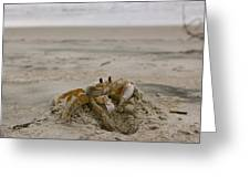 Sand Crab Greeting Card by Nelson Watkins