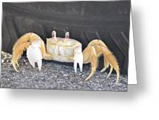 Sand Crab Up Against The Sidewall Greeting Card