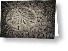 Sand Dollar 3 Black And White Botany Bay Greeting Card
