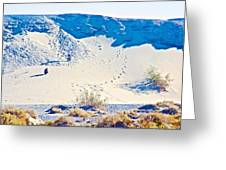 Sand Dune Bordering Salt Creek Trail In Death Valley National Park-california Greeting Card