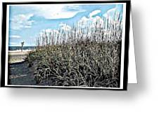 Sand Dunes And Sea Grass Greeting Card