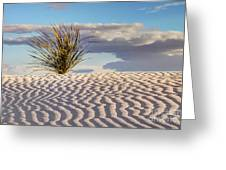 Sand Patterns And The Yucca Greeting Card