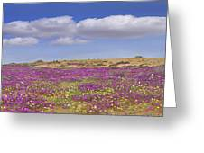 Sand Verbena On The Imperial Sand Dunes Greeting Card