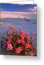 Sand Verbenas At Sunset White Sands National Monument Greeting Card