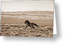 Sand Wash Mustang Greeting Card