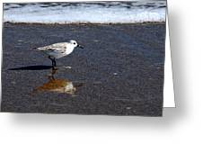 Sanderling 004 Greeting Card