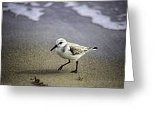 Sanderling On The Shore Greeting Card