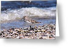 Sanderling Wave Watching Greeting Card