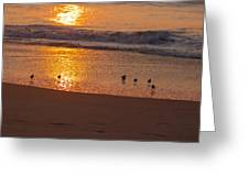Sanderlings At Sunrise Greeting Card