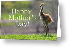 Sandhill Chick Mother's Day Card Greeting Card