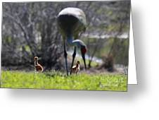 Sandhill Chicks Under Foot Greeting Card