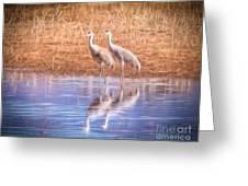 Sandhill Crane 11 Greeting Card