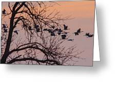 Sandhill Crane Across The Sky Greeting Card