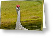 Sandhill Crane Face-on Greeting Card