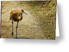 Sandhill Crane On The Road Greeting Card