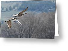 Sandhill Crane Pair 2 Greeting Card