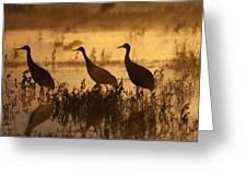 Sandhill Crane Trio At Sunrise Bosque Greeting Card