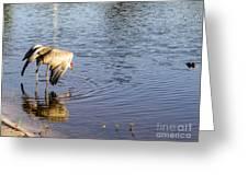 Sandhill Crane Vs Alligator Greeting Card