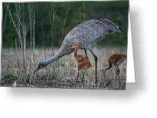 Sandhill Cranes 2 Greeting Card
