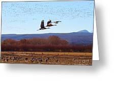 Sandhill Cranes 6 Greeting Card