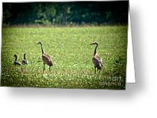 Sandhill Cranes And Friends Greeting Card