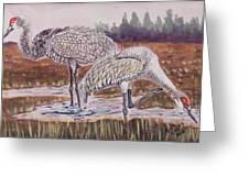 Sandhill Cranes Feeding Greeting Card