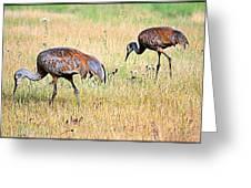 Sandhill Cranes Ll Greeting Card
