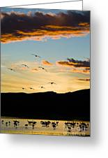 Sandhill Cranes In New Mexico Greeting Card
