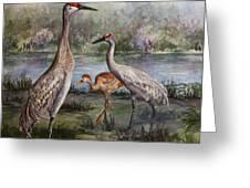 Sandhill Cranes On Alert Greeting Card