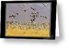 Sandhill Cranes On The Ground Greeting Card