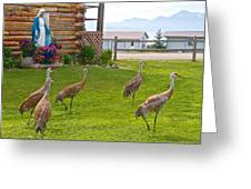 Sandhill Cranes On The Lawn By The Statue Of Mary In Homer-alaska Greeting Card