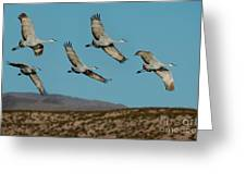 Sandhill Cranes Over Chupadera Mountains Greeting Card