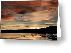 Sandhill Cranes Roosting At Sunset Greeting Card