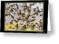Sandhill Cranes Startled Greeting Card