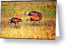 Sandhill Family Greeting Card