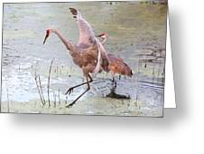 Sandhill Leap Of Faith Greeting Card