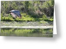 Sandhill Over The Pond Greeting Card
