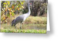 Sandhill Passing By Greeting Card