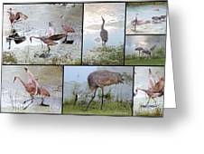 Sandhill Show Greeting Card