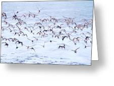 Sandpiper Abstract Greeting Card