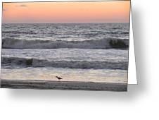Sandpiper At Sunrise Greeting Card