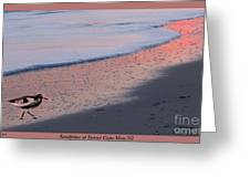 Sandpiper At Sunset Print Greeting Card