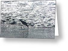 Sandpiper Finds Food In Surf Greeting Card