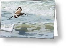 Sandpiper Flight Greeting Card