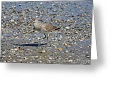 Sandpiper Galveston Is Beach Tx Greeting Card