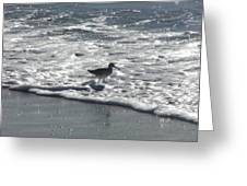 Sandpiper In The Surf Greeting Card